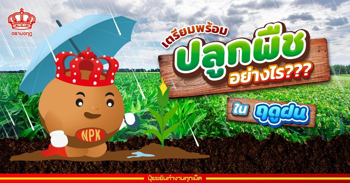 เตรียมพร้อมปลูกพืชอย่างไร?? ในฤดูฝน