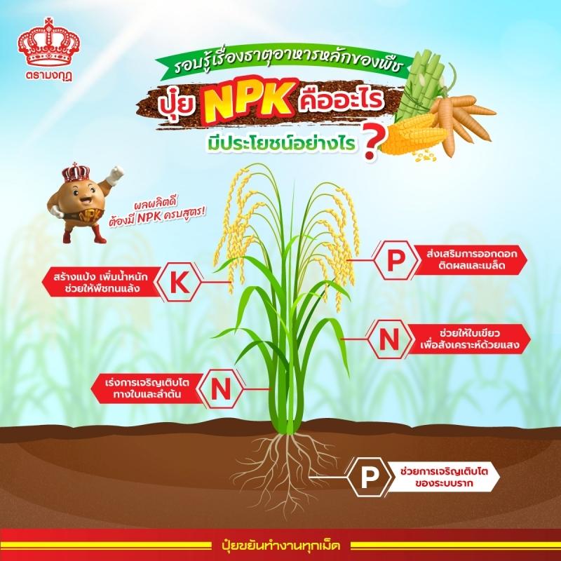 ธาตุอาหารหลักของพืช เรื่องใกล้ตัวที่พี่น้องเกษตรกรควรรู้